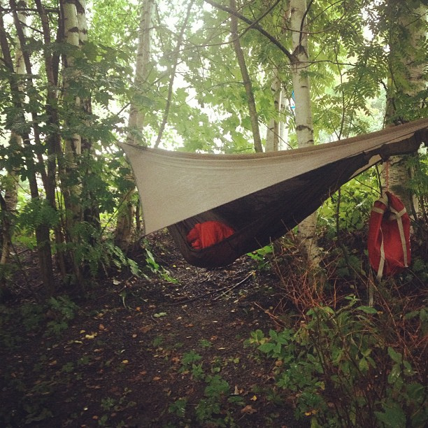 Picture of Henessy Hammock in the woods